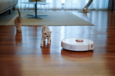 white cat with robot vacuum